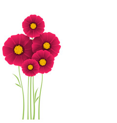 Bunch of flowers dahlias vector