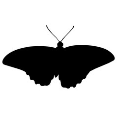 Butterfly silhouette icon eps vector