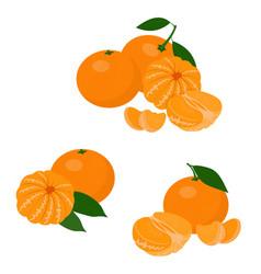 Mandarines tangerine clementine with leaves vector