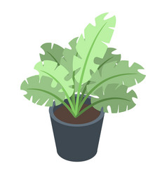 Tropical houseplant icon isometric style vector