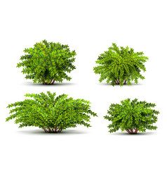 shrubbery 3d isometric bushes isolated on white vector image vector image