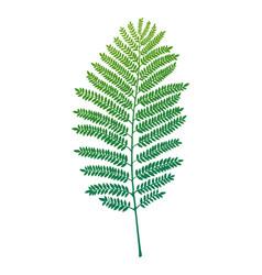 fern leaf vector image vector image