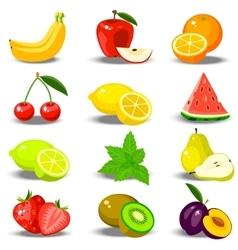 fresh plum and slice vector image