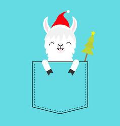 alpaca llama sitting in pocket santa hat fir vector image
