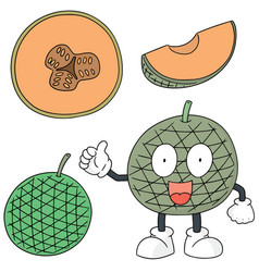 set of melon vector image