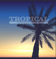 tropical background silhouette palm and sunset vector image