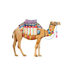 Watercolor camel vector
