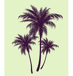 Palm trees in contours vector image