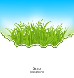 Summer Natural Postcard with Green Grass vector image vector image