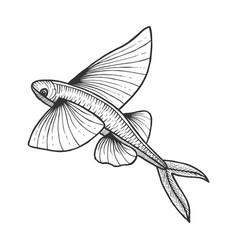 flying fish sketch engraving vector image