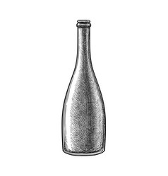ink sketch champagne bottle vector image