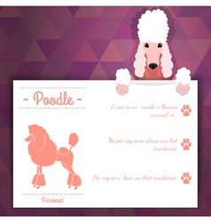 Poodle dog banner vector image vector image