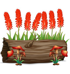 Aloevera flowers and mushrooms on white background vector