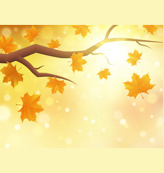 autumn background with branch and maple leaves vector image
