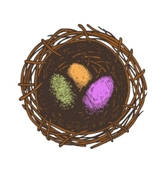 Easter eggs and nest Isolated vector image