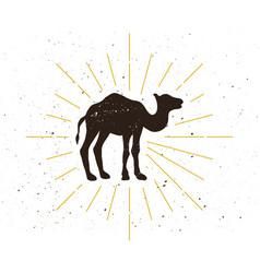 Retro camel silhouette logo vector