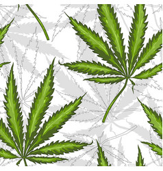 Seamless pattern with leaves hemp marijuana vector