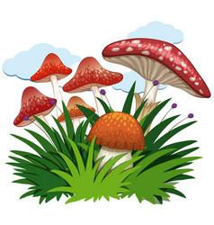 Mushrooms in garden on white background vector