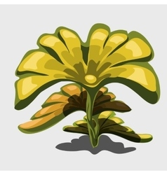 Yellow exotic plant with large leaves vector