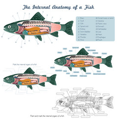 Anatomy a fish fish internal organs vector