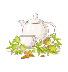 Apricot tea in teapot llustration vector