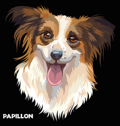 papillon in color vector image