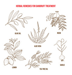 Best herbs for dandruff treatment vector