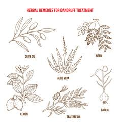 best herbs for dandruff treatment vector image