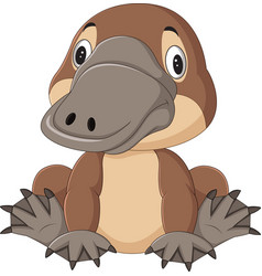cartoon funny platypus isolated on white backgroun vector image