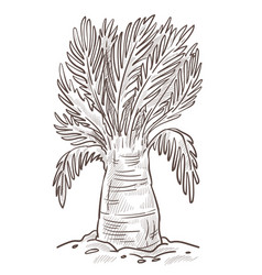 Banana tree or palm isolated sketch wild nature vector