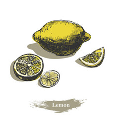 lemon sketch vintage ink hand drawn lemon vector image