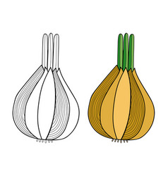 Onion vegetable black and white for vector