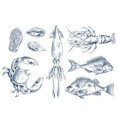 Sea delicacy sketch style set vector