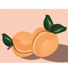 Fresh Peach fruit vector