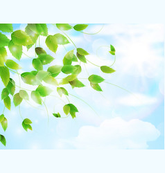 spring background with fresh green leaves vector image