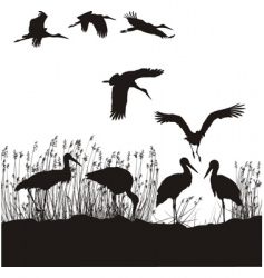 storks in peat vector image vector image