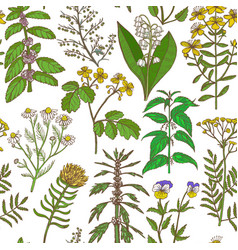 colored pattern with medicinal plants in hand vector image