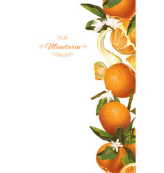 Mandarin vertical banner vector