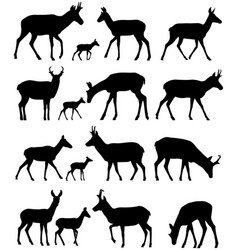 Pronghorn silhouettes vector