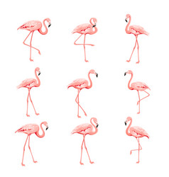 tropical birds collection pink flamingos set vector image
