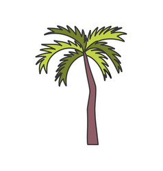 tropical palm tree on white background vector image