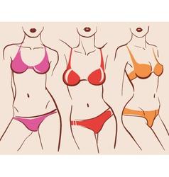 beautiful woman bodies in bikini vector image