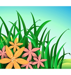 A garden with pink and orange flowers vector image
