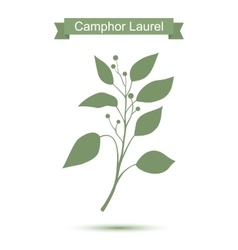 Camphor laurel branch Green silhouette vector