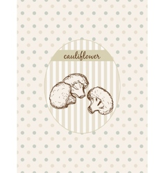 Cauliflower vector