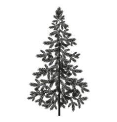Christmas spruce fir tree silhouette vector