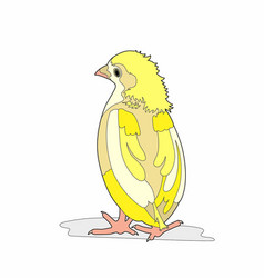 Chick back vector