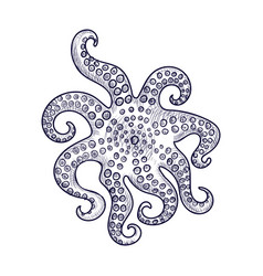drawing octopus vector image