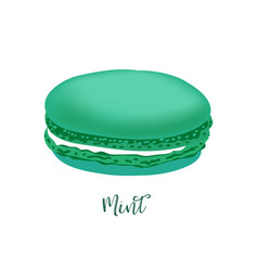 french macaroon vector image