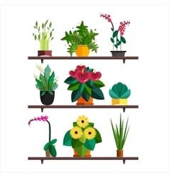 Houseplants indoor and office vector